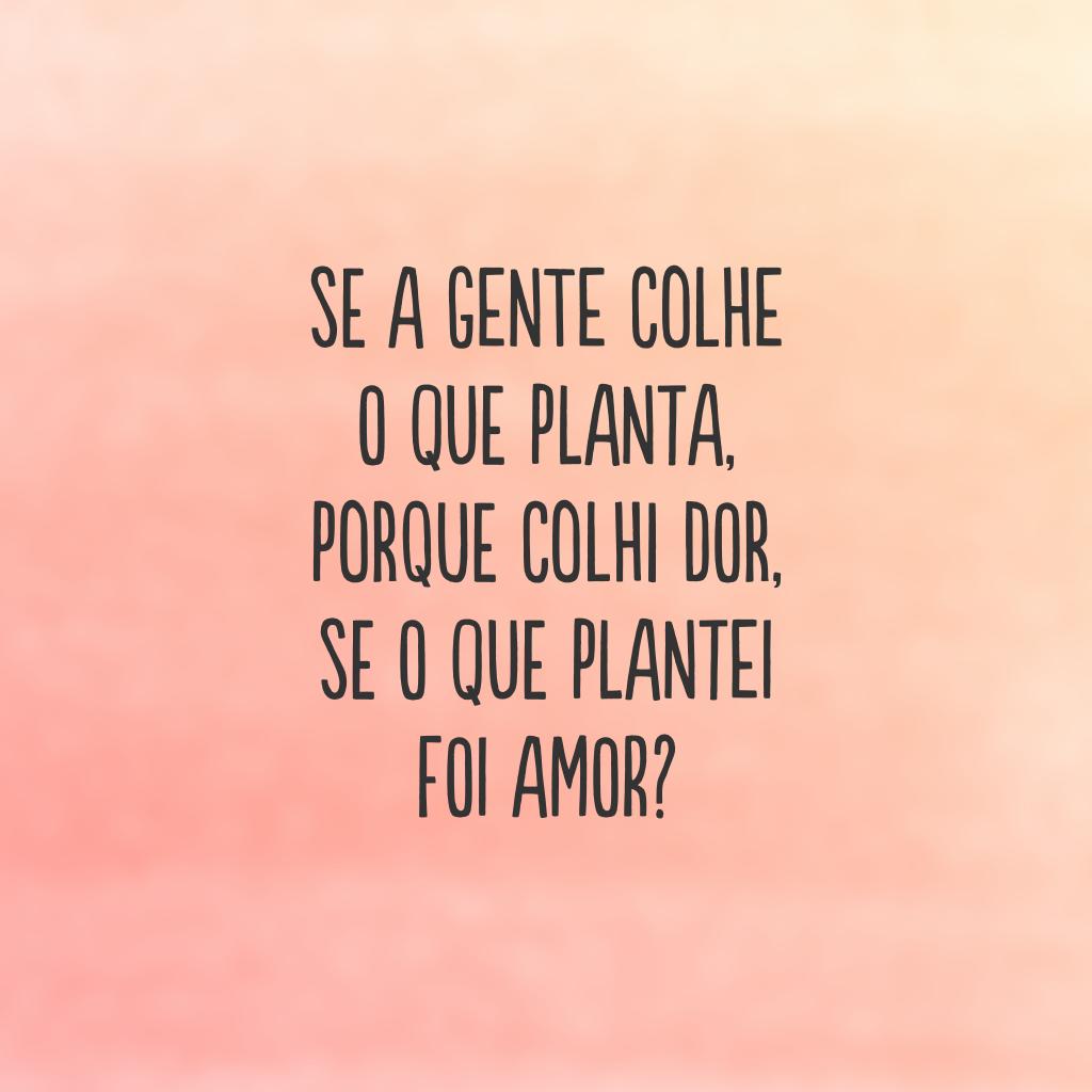 Se a gente colhe o que planta, porque colhi dor, se o que plantei foi amor?