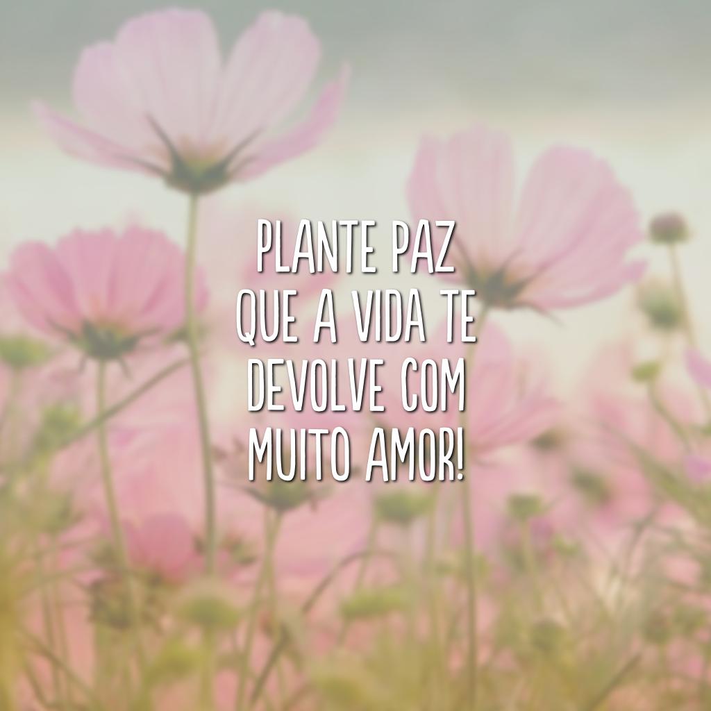 Plante paz que a vida te devolve com muito amor!