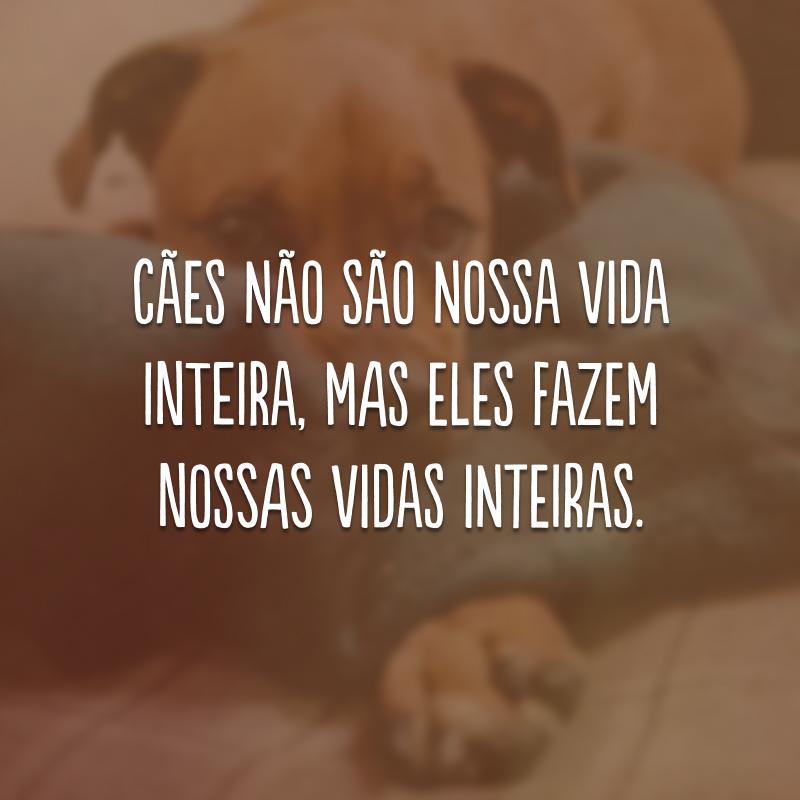 Cães não são nossa vida inteira, mas eles fazem nossas vidas inteiras.