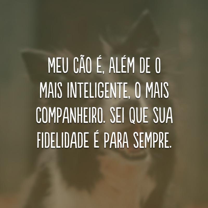 Meu cão é, além de o mais inteligente, o mais companheiro. Sei que sua fidelidade é para sempre.