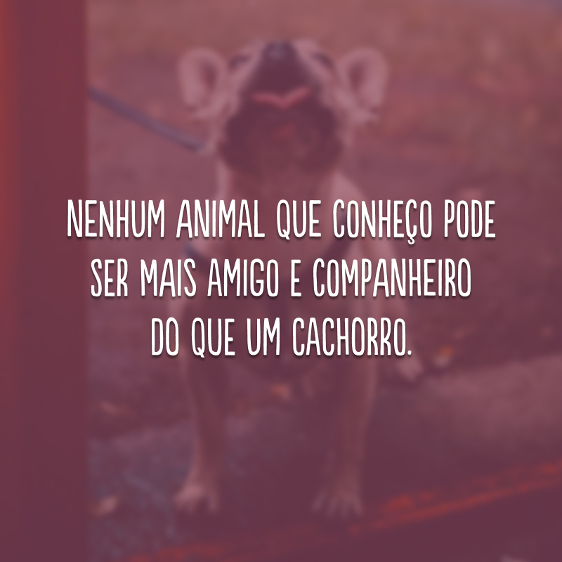 Nenhum animal que conheço pode ser mais amigo e companheiro do que um cachorro.