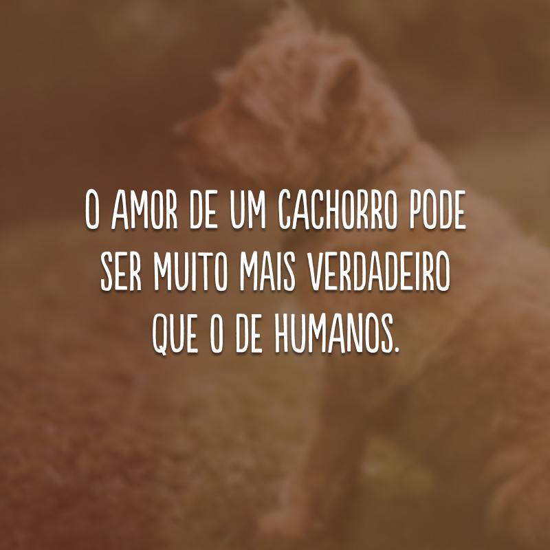 O amor de um cachorro pode ser muito mais verdadeiro que o de humanos.