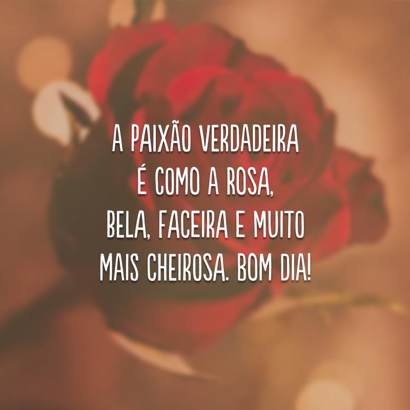 A paixão verdadeira é como a rosa, bela, faceira e muito mais cheirosa. Bom dia!
