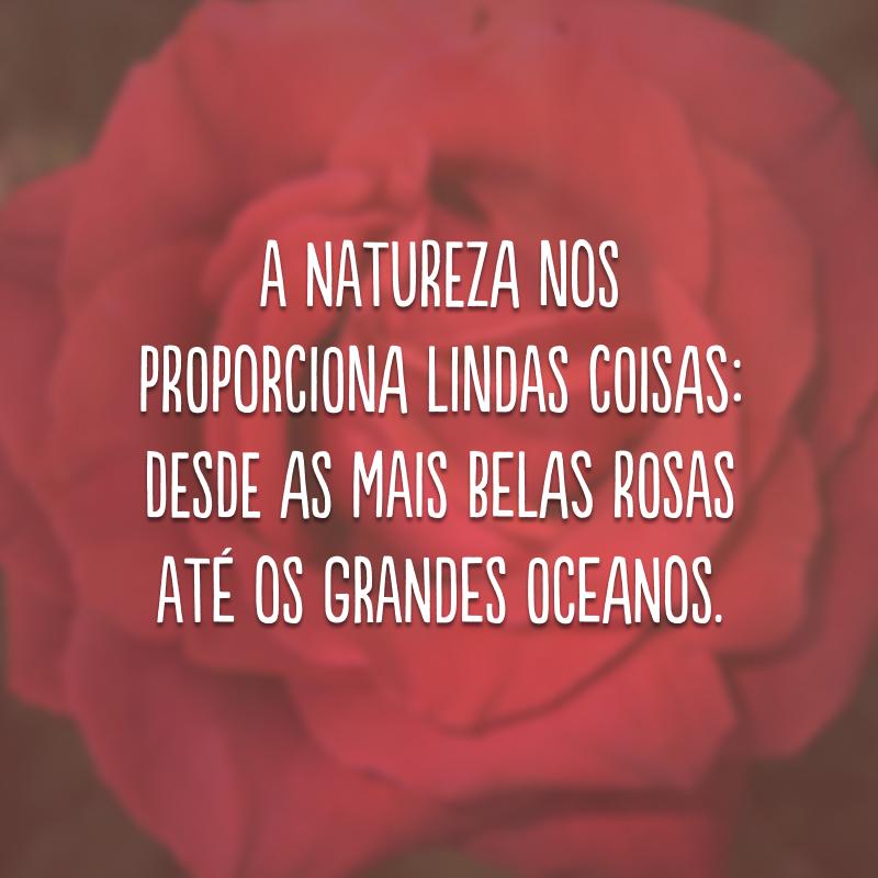A natureza nos proporciona lindas coisas: desde as mais belas rosas até os grandes oceanos.