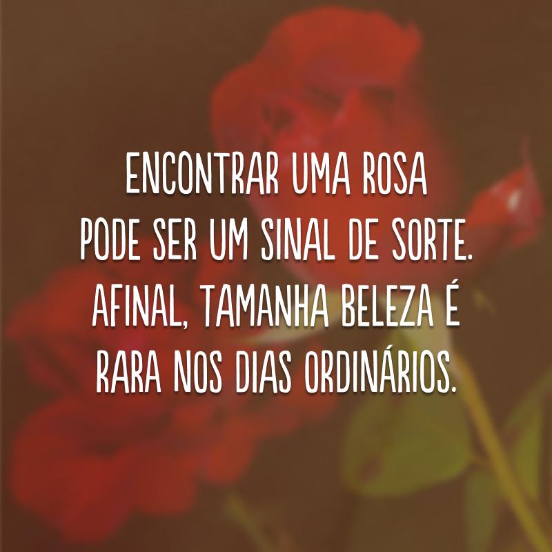 Encontrar uma rosa pode ser um sinal de sorte. Afinal, tamanha beleza é rara nos dias ordinários.