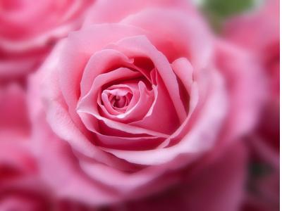 40 frases sobre rosas para admirar a flor mais romântica de todas