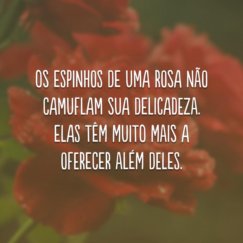 Os espinhos de uma rosa não camuflam sua delicadeza. Elas têm muito mais a oferecer além deles.