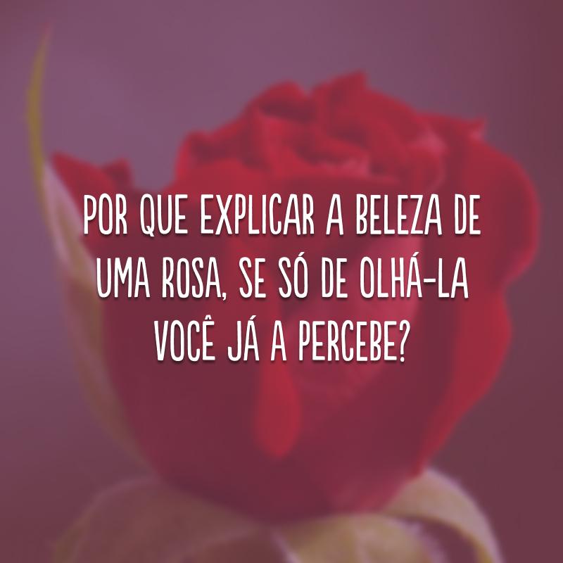 Por que explicar a beleza de uma rosa, se só de olhá-la você já a percebe?